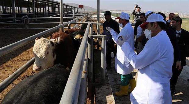 Tarım ve Orman Bakanlığı'ndan hayvancılığa bir yük daha: Aşılar artık paralı