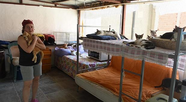 Evini kedi barınağına çevirdi: Emekli maaşımı onlara harcıyorum
