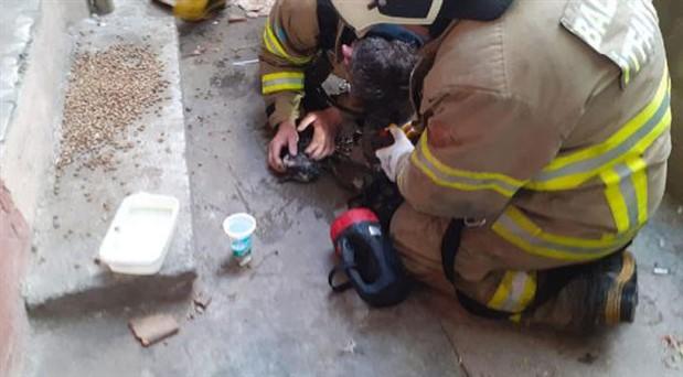 Yangında nabzı duran kedi suni teneffüsle hayata döndürüldü