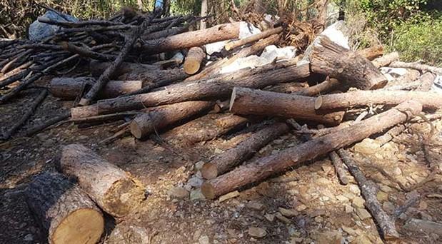 Marmaris'te doğa katliamı: Milli parktan ağaç kestiler