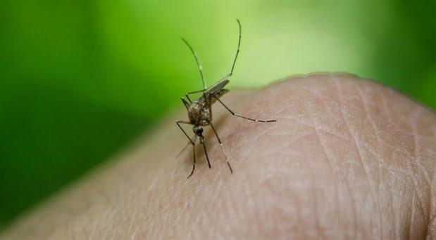 İBB: Avcılar'daki 'Batı Nil Virüsü' ile mücadele çalışmaları artırıldı