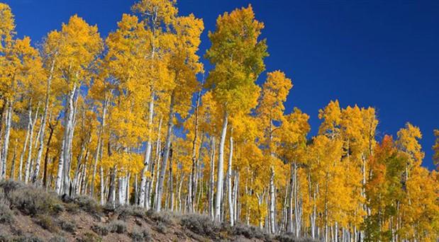 Dünyanın en yaşlı 10 ağacı