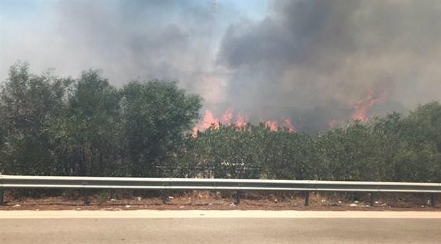 Alaçatı'da orman yangını
