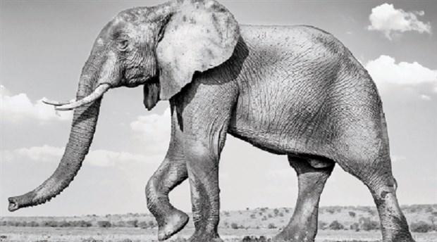 Filler politiktir