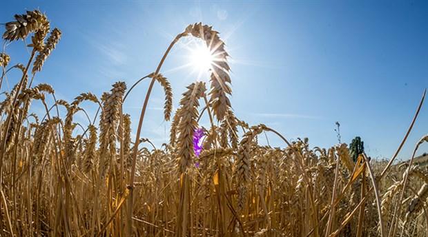 İklim gıdayı da vuruyor