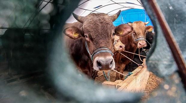 Türkiye'nin canlı hayvan ithalatı 326 milyon dolar, ihracatı 36 milyon dolar