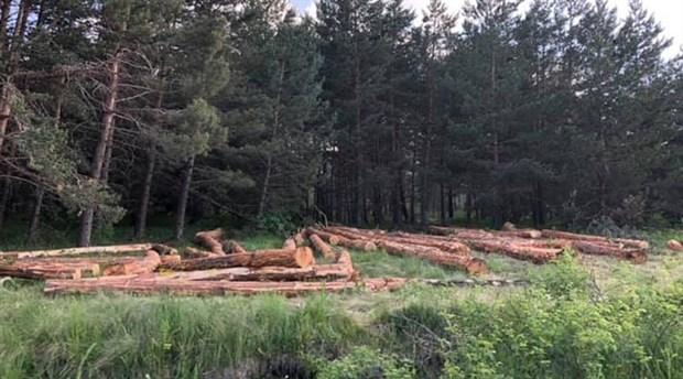 Sarıçam Ormanları da yok edililyor