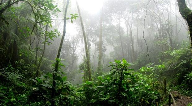 Dünyanın akciğeri Amazon yanıyor