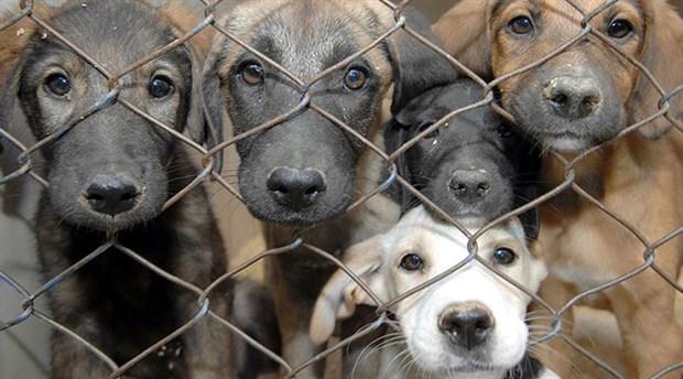 'Barınaktaki hayvanlar asitle öldürüldü' iddiası