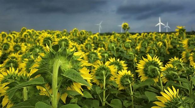 Bosna Hersek'ten yapılan ayçiçeği tohumu ithalatında vergi sıfırlandı