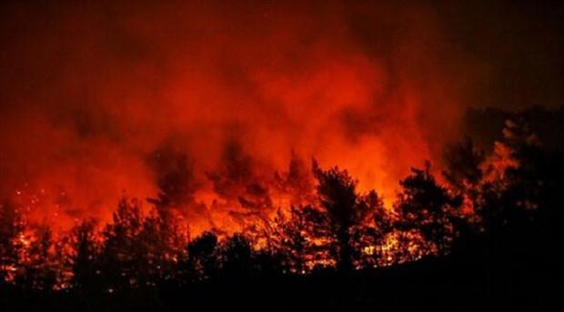 HDP İzmir: Yanan ormanlar yeniden ağaçlandırılmalıdır