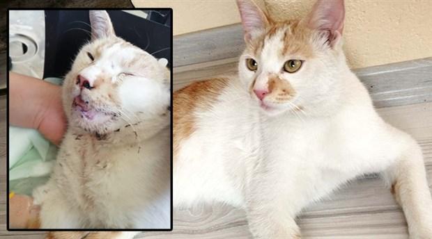 Kediye işkence edip kanıyla yazı yazdılar