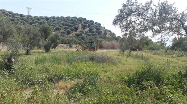 Aydın'da JES için zeytin ağaçları katledildi!