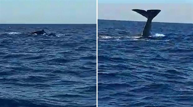 Alaçatı'da balina heyecanı