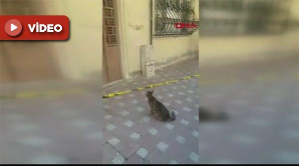 Tahliye edilen binada kalan yavrularını ne yapıp edip kurtaran kedi