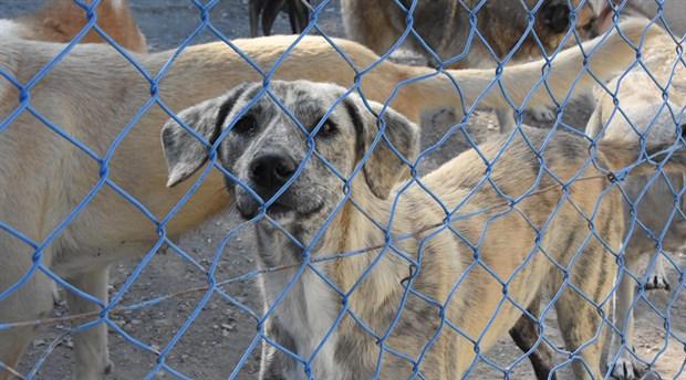 Hayvan hakları savunucularından ortak çağrı