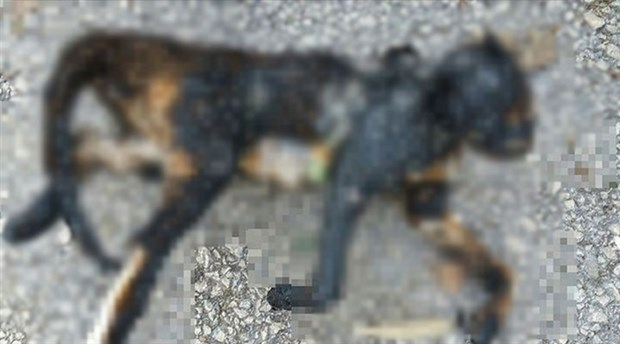 Bursa'da bir kedi yakılarak öldürüldü!