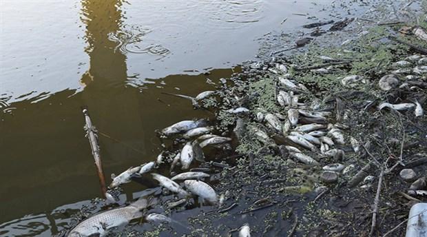 Susurluk Çayı'nda balık ölümleri sürüyor