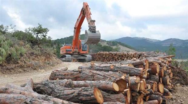 'Ağaçlandırma' seferberliği ormanlardaki yıkımı önler mi?
