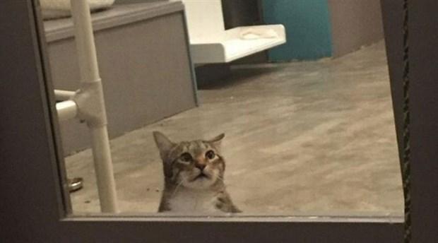 Kedi çetesi liderine tecrit