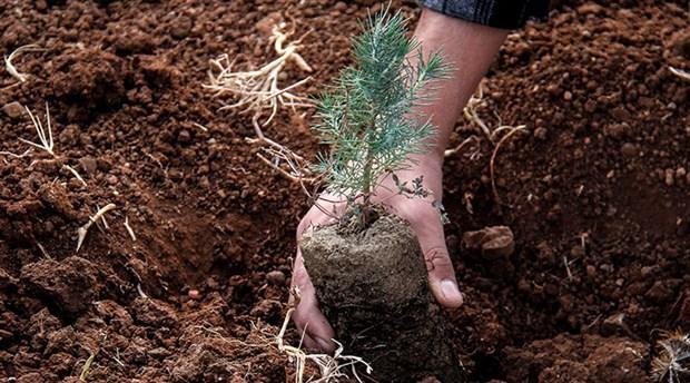 Orman Bakanlığı'nın talimatı ile yurt genelinde 11 milyon fidan dikildi:  'Geleceğe Nefes' olmaktan uzak