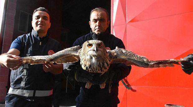 Sivas'ta bir eve giren puhu tedaviye alındı
