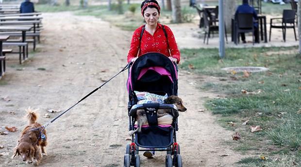 Felçli köpeğini bebek arabasıyla gezdiriyor