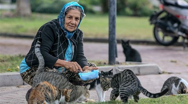 150 sokak kedisi sahipsiz değil