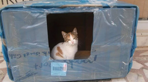 Kedi dostlarımızı soğuktan korumak çok basit