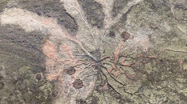 Dünyanın en eski ağaç fosilleri New York'ta bulundu