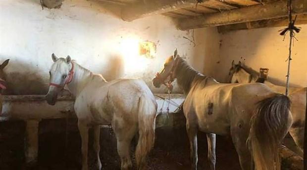 Öldürülen at sayısı 702