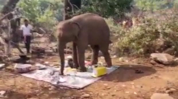 Karnı acıkan fil, piknik yapan insanlara katıldı