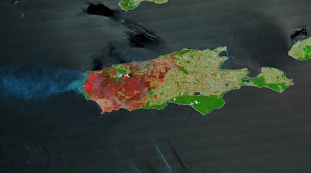 NASA'nın uydu fotoğraflarına göre Kanguru Adası'nın üçte biri yandı