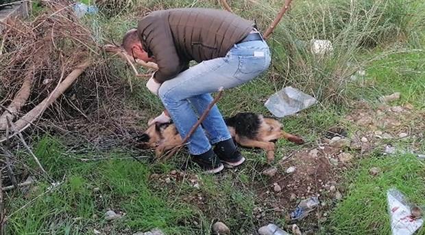Köpeği bıçaklayan adam: İnsanlara zarar vermesini engelledim