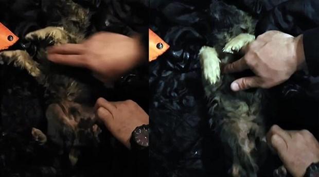 Soğuktan donan köpeği kalp masajıyla hayata döndürdüler
