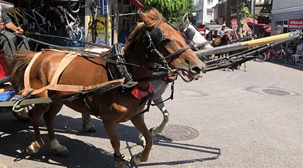 Ulaşım, turizm, kültür, etik... Atlar nereye koşuluyor?