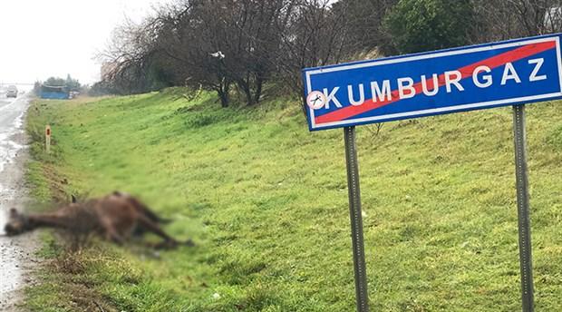 İstanbul'da yol kenarına bırakılan atlara araba çarptı