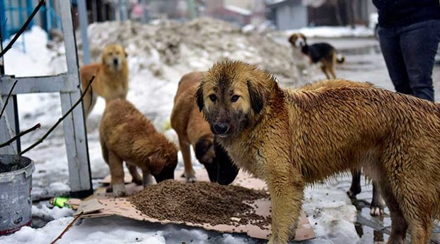 Belediyeden skandal cevap: Köpekler görüntü kirliliğiymiş!