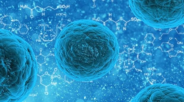 Alışılmışın dışında yeni bir virüs keşfedildi: Yaravirüs