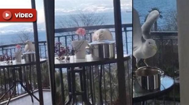 Soğusun diye balkona bırakılan kapuskayı martı yedi