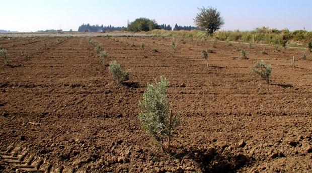 İzmir'in tarım sorunu TBMM'de