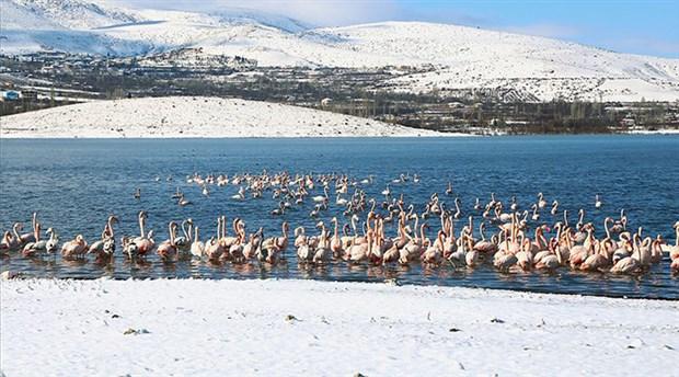 Konya'da 13 flamingo soğuktan dolayı hayatını kaybetti