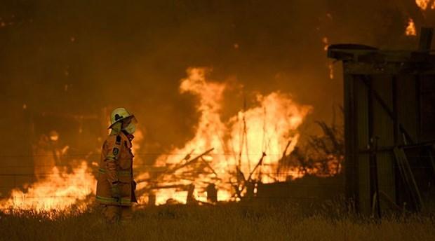 Avustralya'daki yangınlarda 113 canlı türü için 'acil yardım' çağrısı