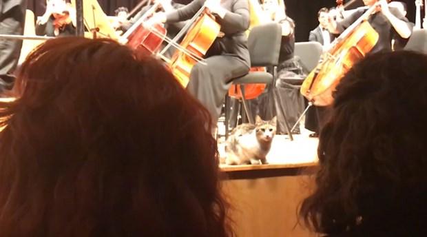 CRR'nin konser tutkunu kedileri