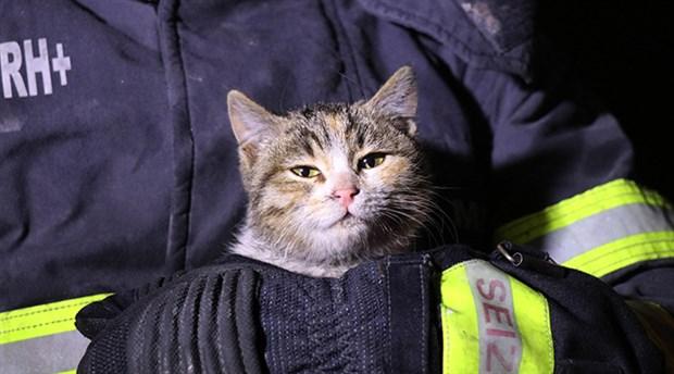 Yanan evde mahsur kalan yavru kediyi itfaiye kurtardı