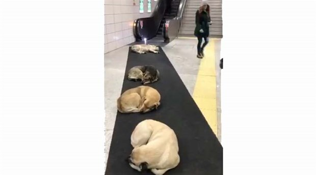 Köpekler ısınmak için Marmaray'a sığındı
