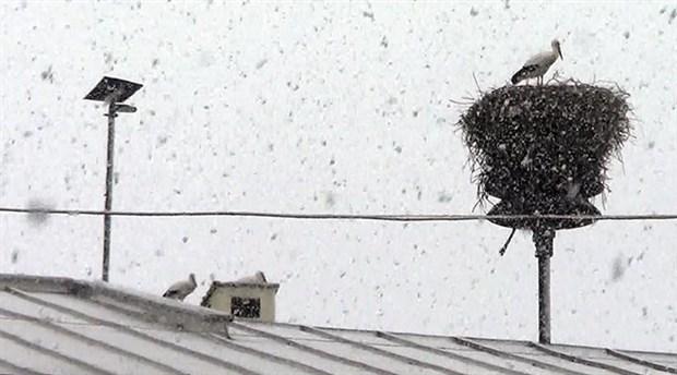Iğdır'da göç etmeyen leylekler kar altında kaldı