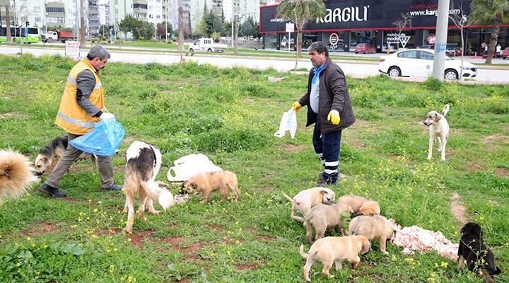 Seyhan'da sokak hayvanları için seferberlik