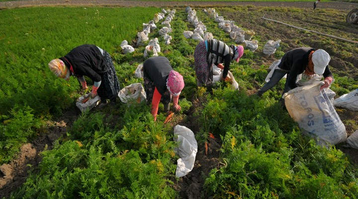 İzmir Tarım Grubu: Önlem alınmazsa gıda krizi kapıda