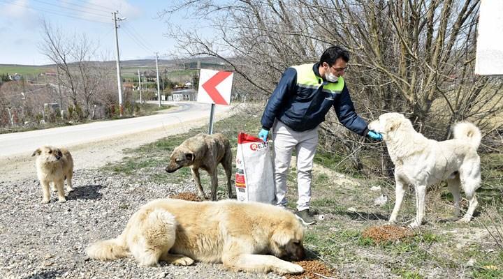 Tepebaşı'nda sokak hayvanları unutulmuyor